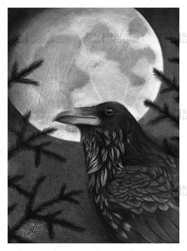 Spirits of the forest: Raven
