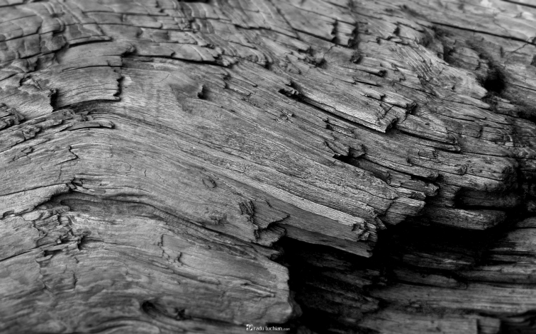 woodfiber