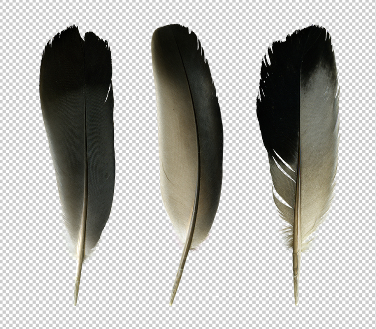 precut-image-pigeon-feathers