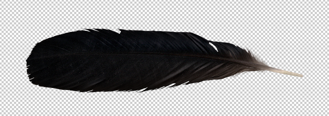 Raven Feather