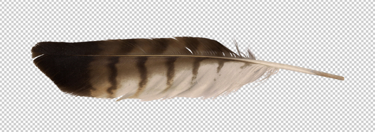 precut-image-eagle-feather